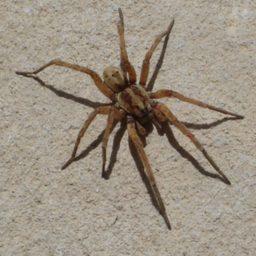 Уничтожение пауков в Нижнем Тагиле